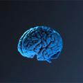 Introducción al cerebro