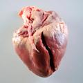 El corazón