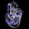 Sobre el corazón