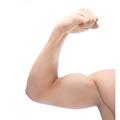 Los músculos esqueléticos