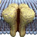 Transporte a través de la membrana celular