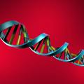 Genes dominantes y recesivos