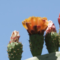 Vida vegetal en hábitats extremos