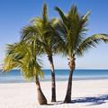 El aceite de palma: ¿el biocombustible del futuro?