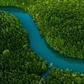 Biomas terrestres: selvas tropicales