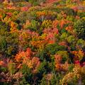 Biomas terrestres: bosque de hoja caduca