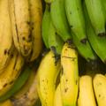 La maduración de la fruta