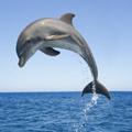 Hidrodinámicos: delfines frente a hombres