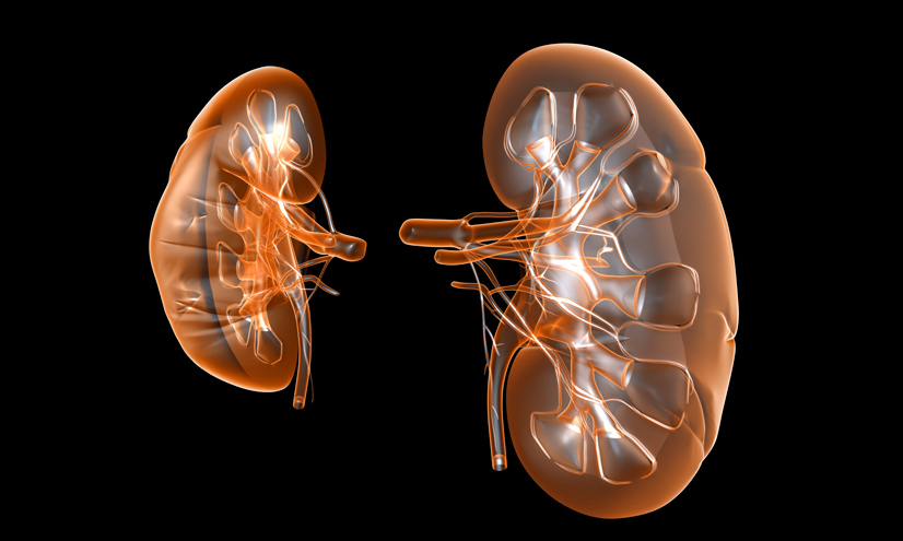 Los riñones