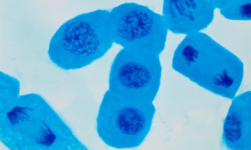 División celular: mitosis