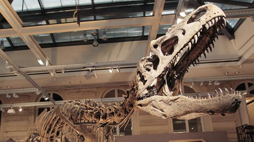 Extinción masiva: los dinosaurios