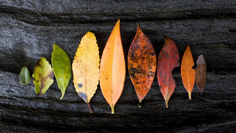 Partes de la planta: las hojas