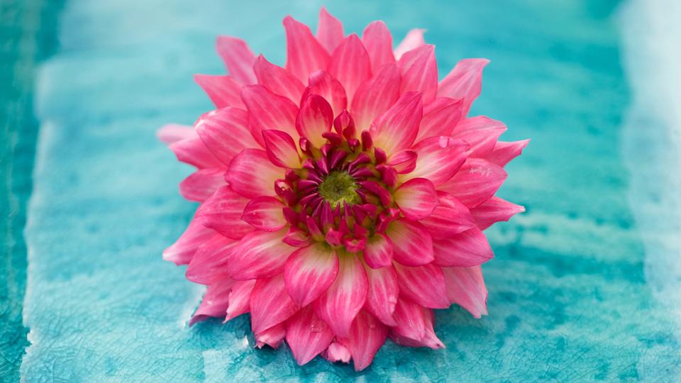 Partes de la planta: las flores