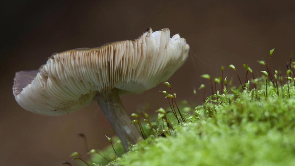 Mutualismo entre plantas y animales