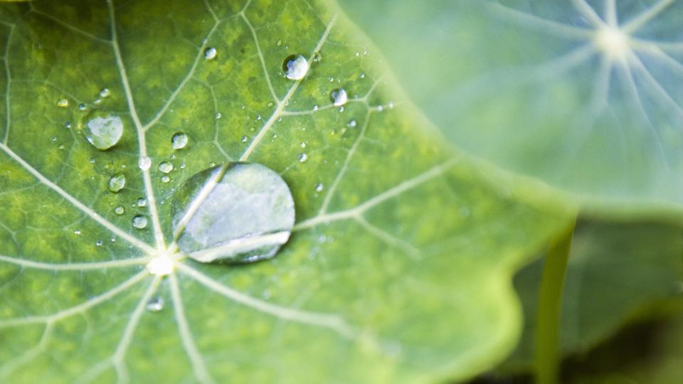 ¿Qué necesitan las plantas para crecer?