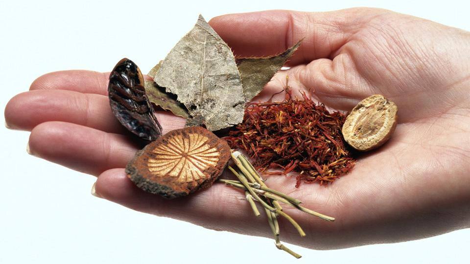Las plantas y la medicina