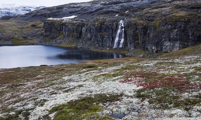 Biomas terrestres: la tundra