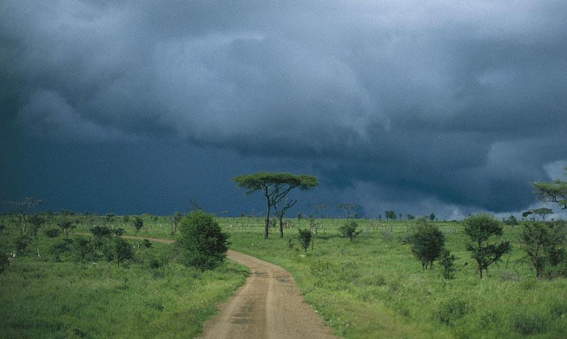 Biomas terrestres: la sabana
