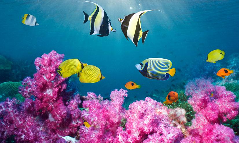 Los océanos: mares de coral