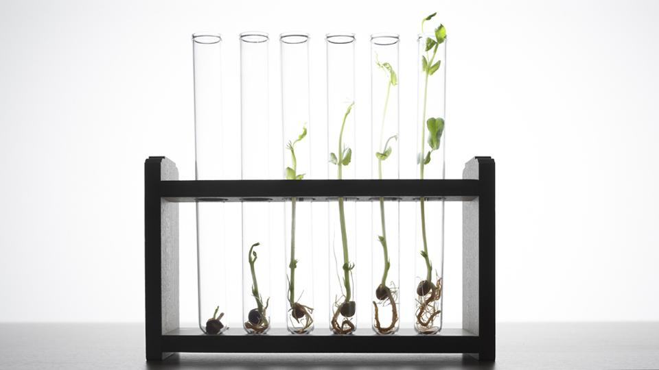La bioacumulación