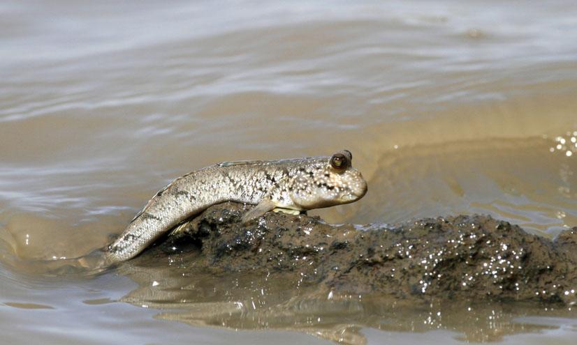¿Cómo evolucionaron los peces?