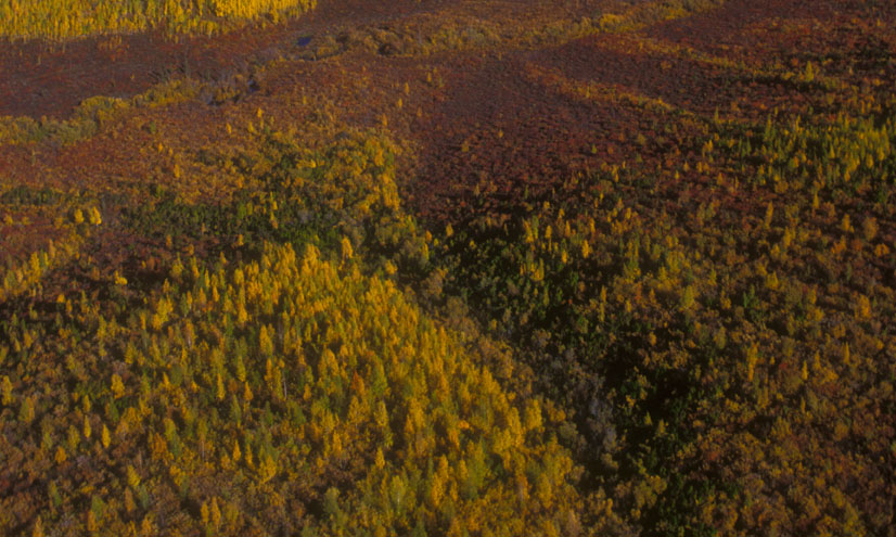 Biomas terrestres: la taiga