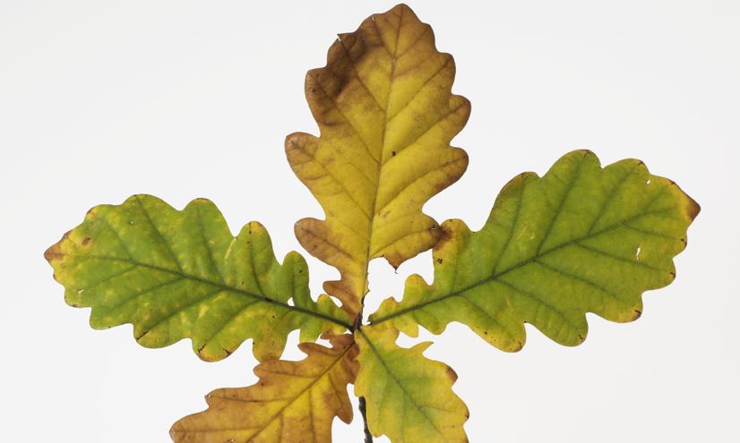 ¿Por qué cambian de color las hojas?