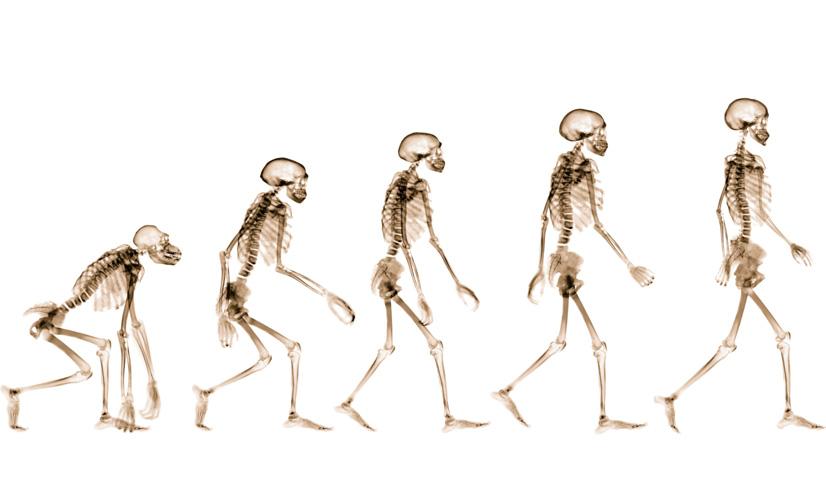 La evolución humana: las pruebas