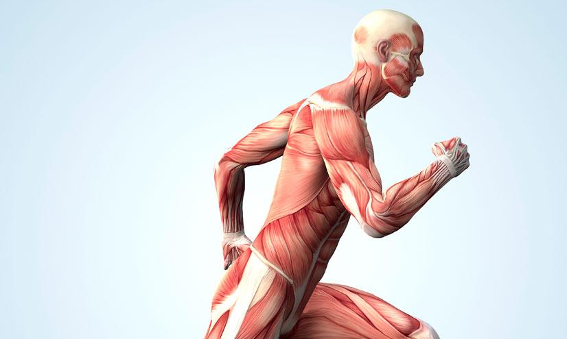 ¿Qué significa estar en forma?