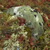 Lichen Covered Boulder